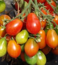 Rajče Radana - Lycopersicon Esculentum - osivo rajčat - 15 ks