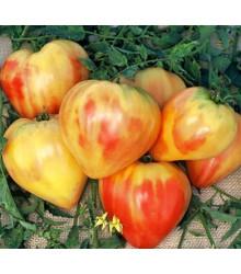 Rajče ruské oranžové - prodej semen rajčat - 6 ks