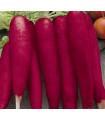 Ředkev Rosa - Raphanus sativus - osivo ředkve - 150 ks