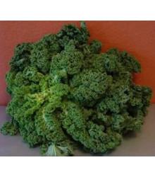 Kadeřávek zelený zimní - semena kadeřávku - 150 ks