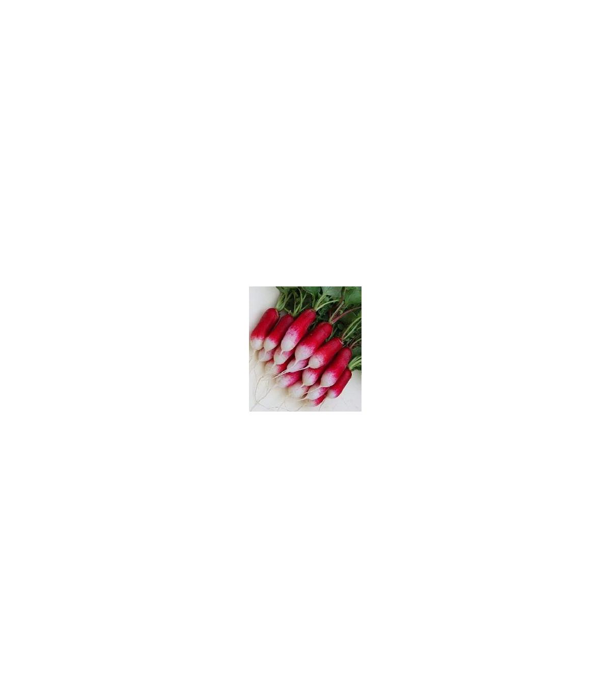 BIO Ředkev francouzská červenobílá - semena ředkve - 0,3 g