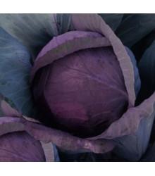 Zelí hlávkové červenočerné - Brassica oleracea - prodej semen - 0,5 gr