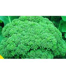 More about Brokolice Calabrese - Brassica oleracea L. - prodej semen brokolice - 180 ks