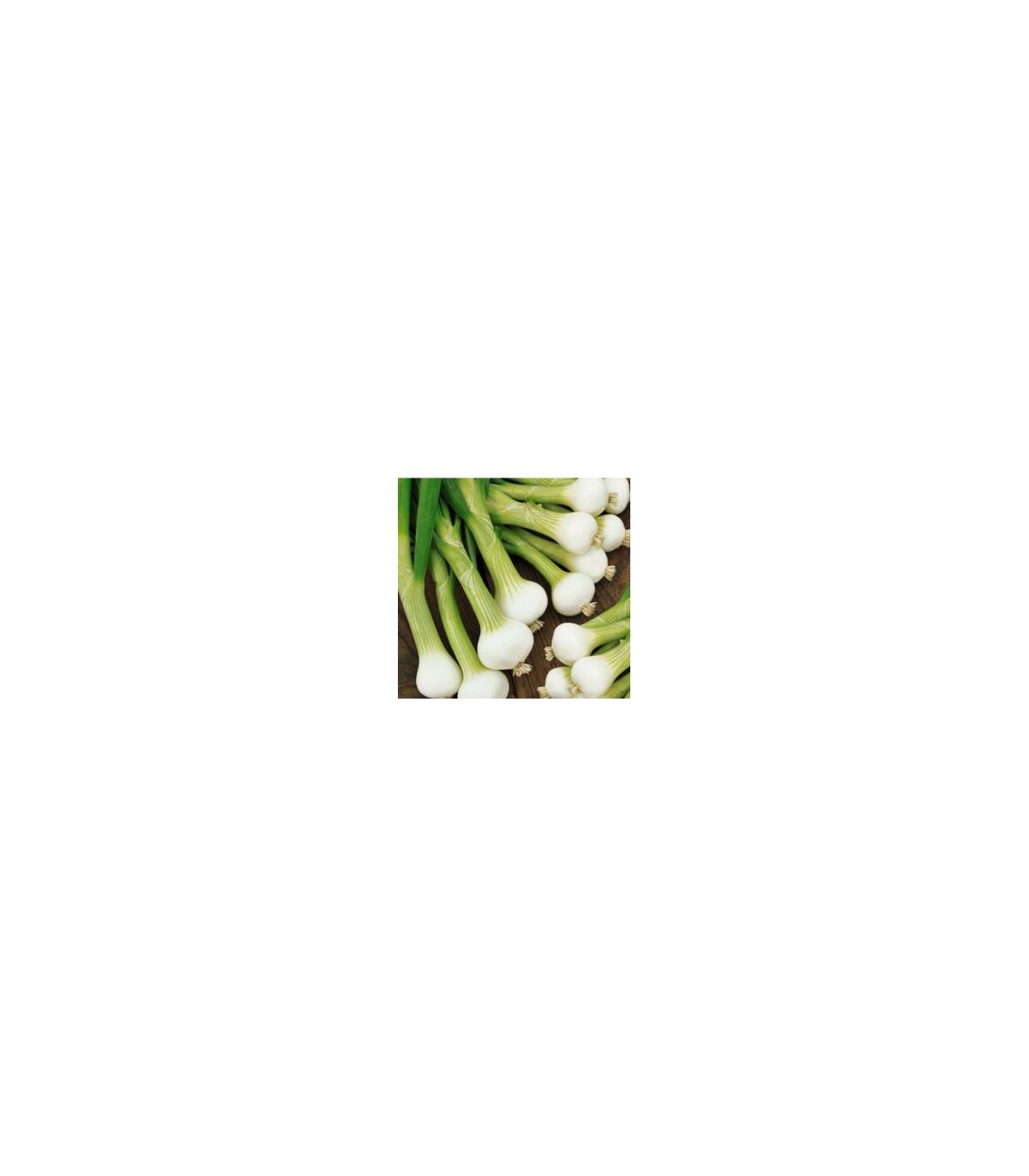 Cibule jarní bílá - lahůdková - semena cibule - 1 gr