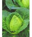 Zelí bílé velmi rané - prodej semen zelí - 0,8 gr