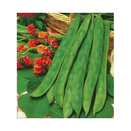 Fazol šarlatový pnoucí - prodej semen fazole - 15 ks