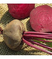 More about Řepa salátová tmavě červená - semena řepy - 1 gr