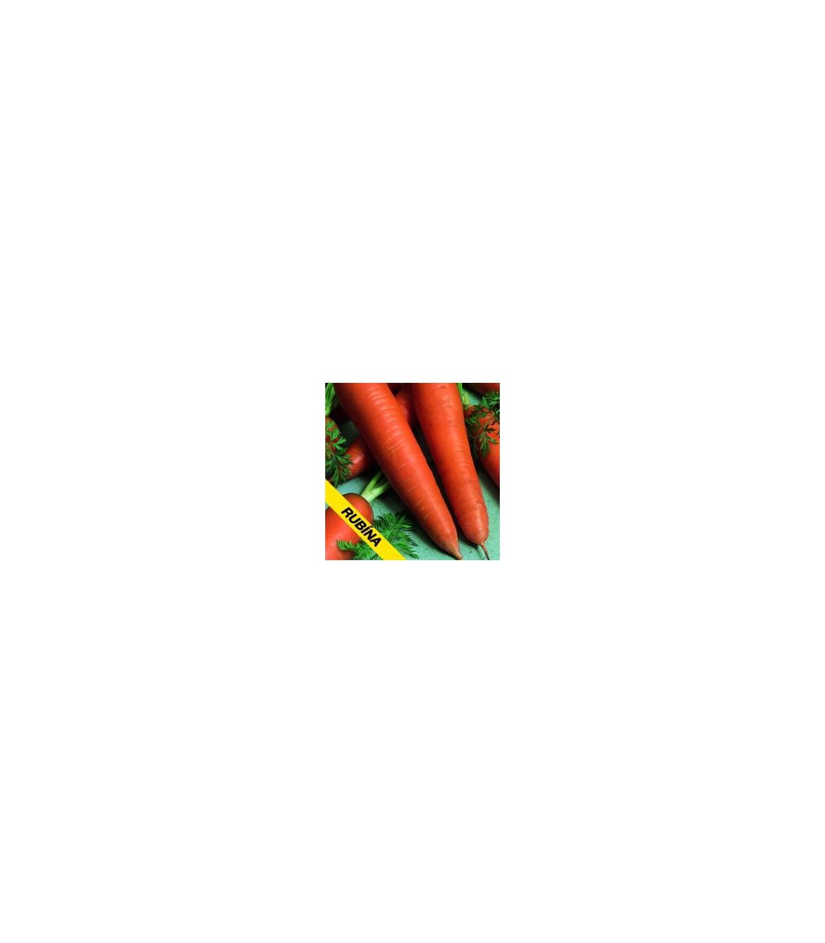 Mrkev Rubina - prodej semen Daucus carota - 1 gr