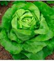 Salát hlávkový máslový - 0,5 gr - prodej semen salátu hlávkového