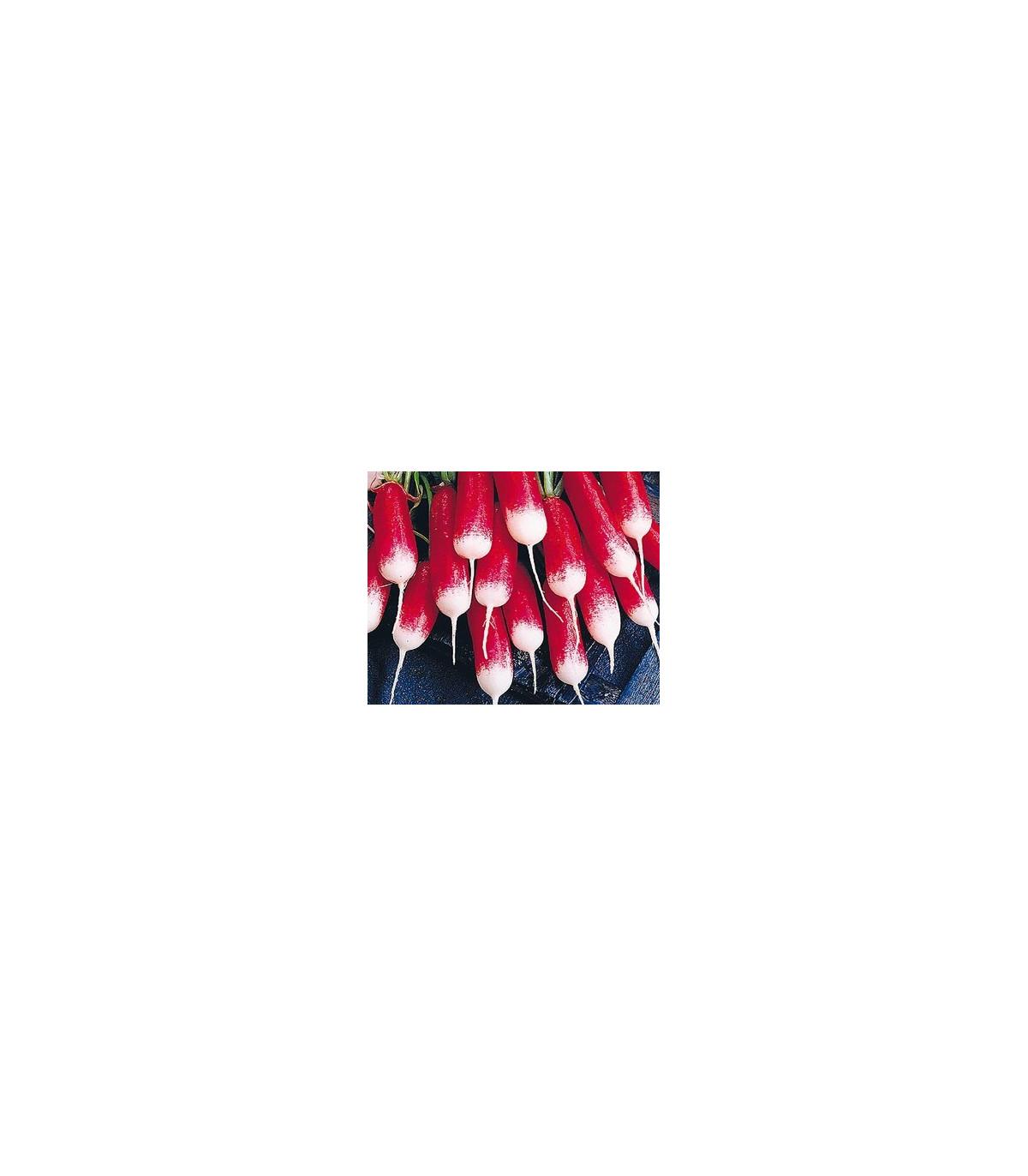 Ředkvička francouzská - Raphanus sativus - prodej semen ředkvičky - 0,5 gr
