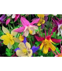 More about Orlíček velkokvětý - směs barev - Aquilegia caerulea - semena trvalek - 250 ks