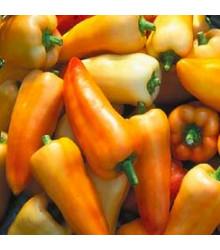Paprika maďarská Feher - prodej semen papriky - 20 ks