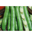 Bob obecný - Vitia faba - prodej semen bobu - 20 gr