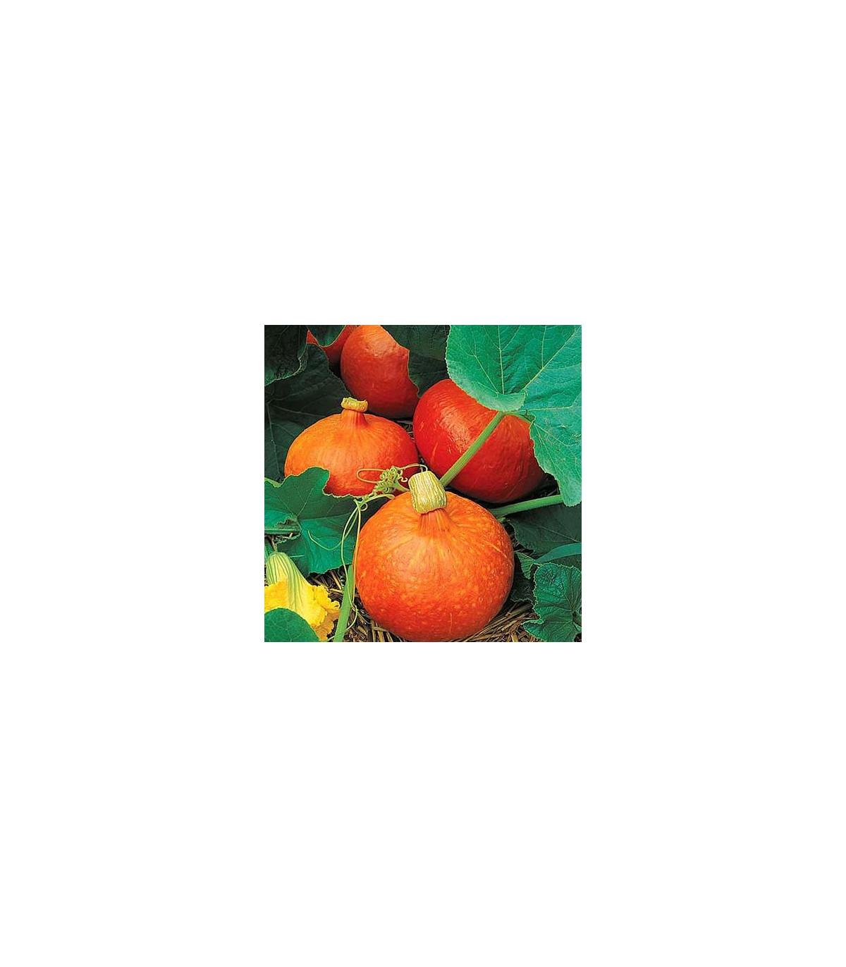 Dýně Uchiki Kuri - prodej semen dýně - 1 gr