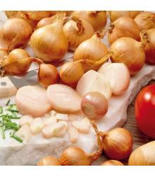 More about Cibule Zittauer žlutá - prodej semen cibule - 1 g