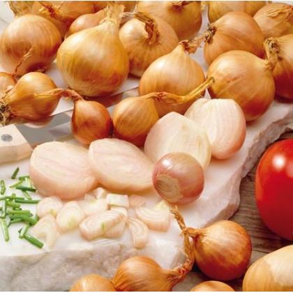 Cibule Zittauer žlutá - prodej semen cibule -