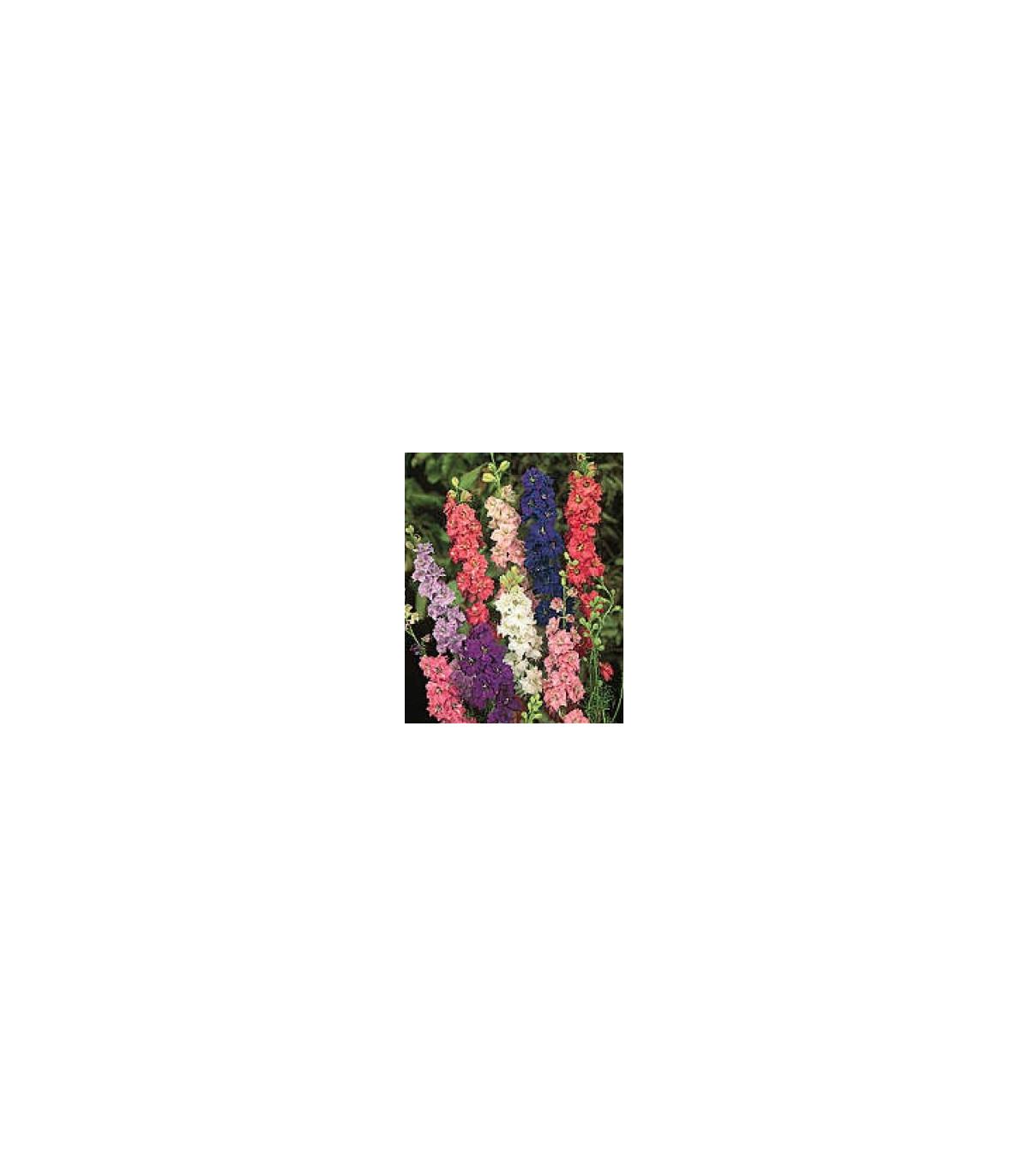 Stračka zahradní hyacintokvětá směs barev - Delphinium ajacis - osivo stračky - 300 ks