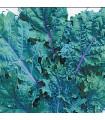Kedluben červený ruský - Brassica oleracea - prodej semen - 0,5 gr