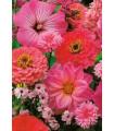 Letničky - zahradní sen v růžovém - semena letniček - 0,9 g