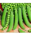 Hrách cukrový - Hendriks - Pisum sativum - semena hrášku - 12 gr