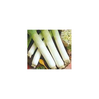 Pór - Genita - osivo pórku - rostlina Allium porrum - 1,5 gr