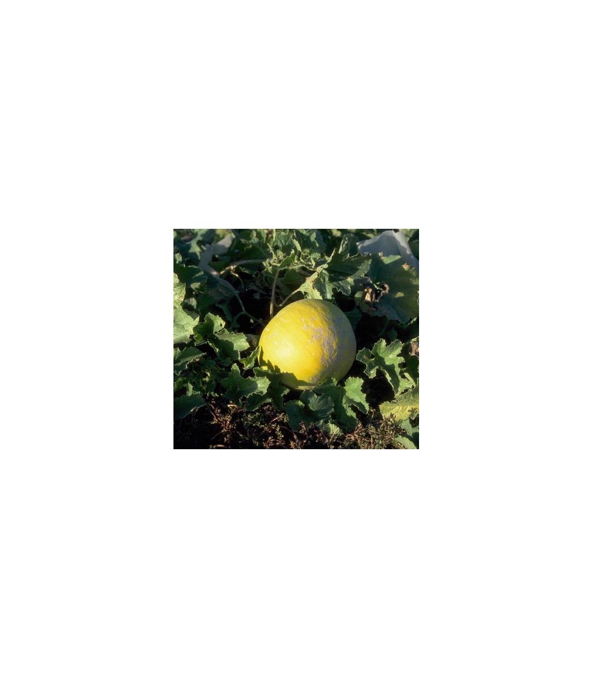 Melou cukrový- semena- 5 ks
