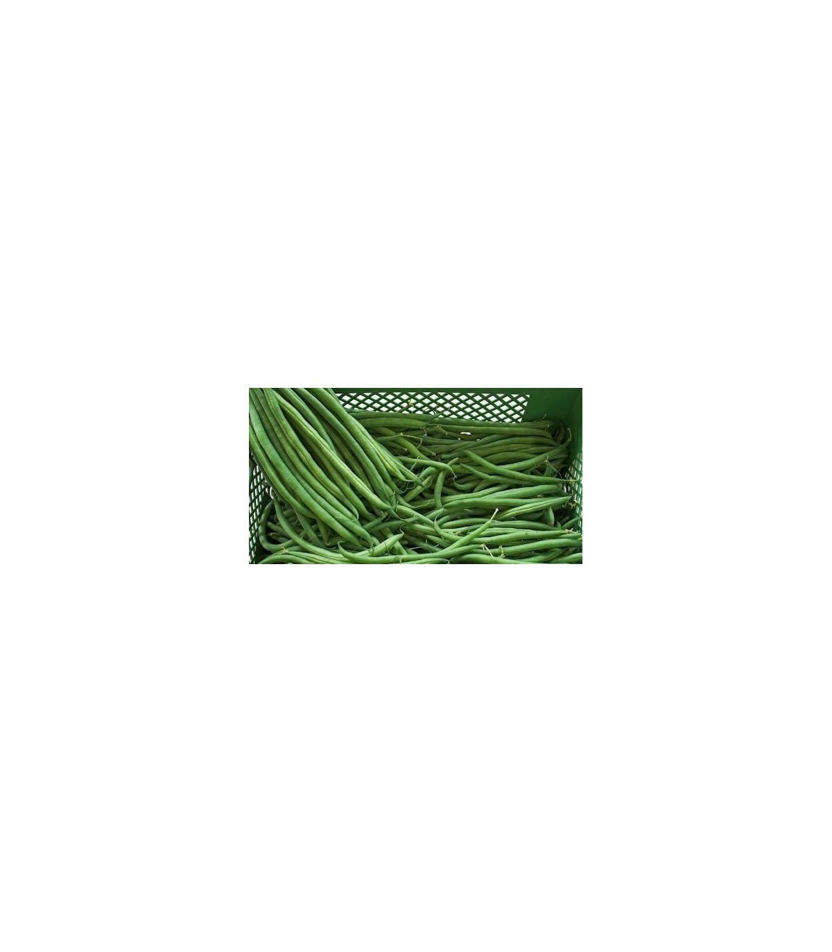 Fazol keříčkový Newton - prodej semen fazole - 8 ks