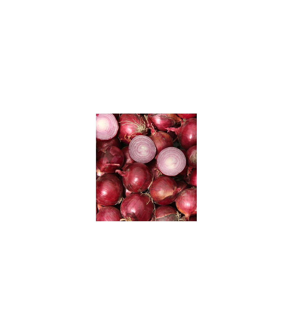 Cibule Červený baron - Allium cepa L. - prodej osiva cibule - 0,08 gr