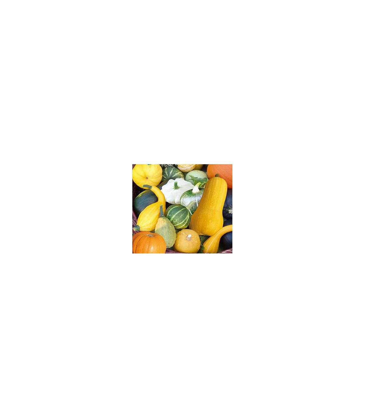 Tykev velkoplodá Gourmet - rostlina Cucurbita maxima - prodej semen tykve - 4 ks