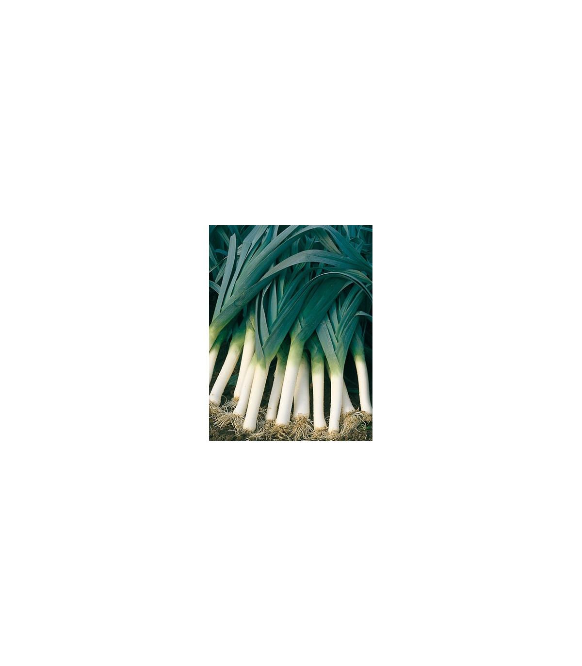 Pór bio kvalita Belton F1 - prodej BIO semen póru - kvalitní bio osiva pórku - 10 ks