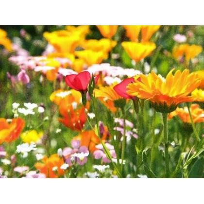 Směs divokých aromatických bylin - Aromatické byliny divoké směs - koupit semena bylin - 0,2 g - prodej semen