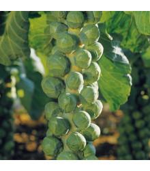 Kapusta růžičková Hilds Ideal - Brassica oleracea - semena kapusty - 0,5 gr
