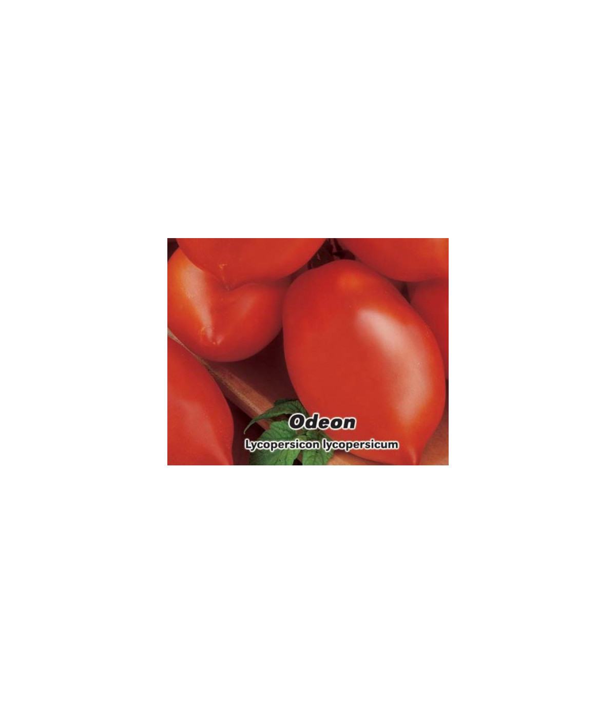 Rajče Odeon keříčkové - Lycopersicon Lycopersicum - prodej semen rajčat - 0,1 g