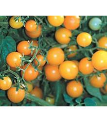 Divoké rajče žluté - Lycopersicon pimpinellifolium - prodej semen divokých rajčat - 6 ks
