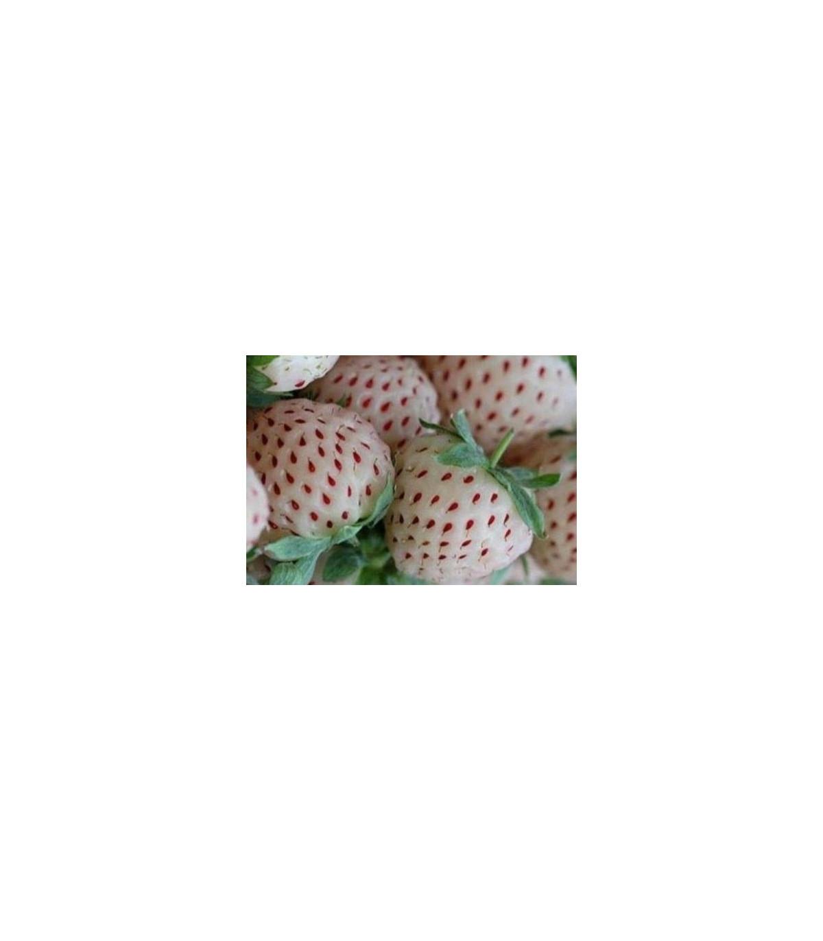 Jahodník bílý - Fragaria vesca - prodej semen jahodníku - 10 ks