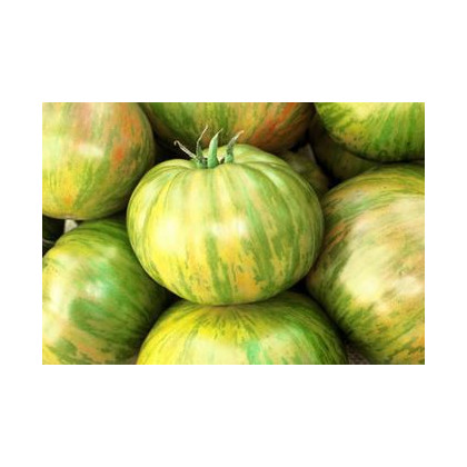 Rajče - Velká zebra - Lycopersicon esculentum - semena rajčat - 6 ks