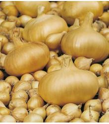 Cibule štutgartská žlutá - Allium cepa - prodej semen cibule - 1 g