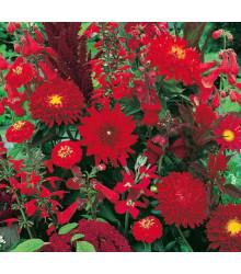 Letničky Zahradní sen v červeném - směs - osivo letniček - 0,9 g