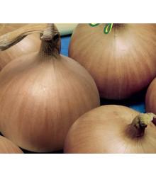 Cibule jarní Signum - semena cibulky - allium cepa - prodej semen - 0,5 g