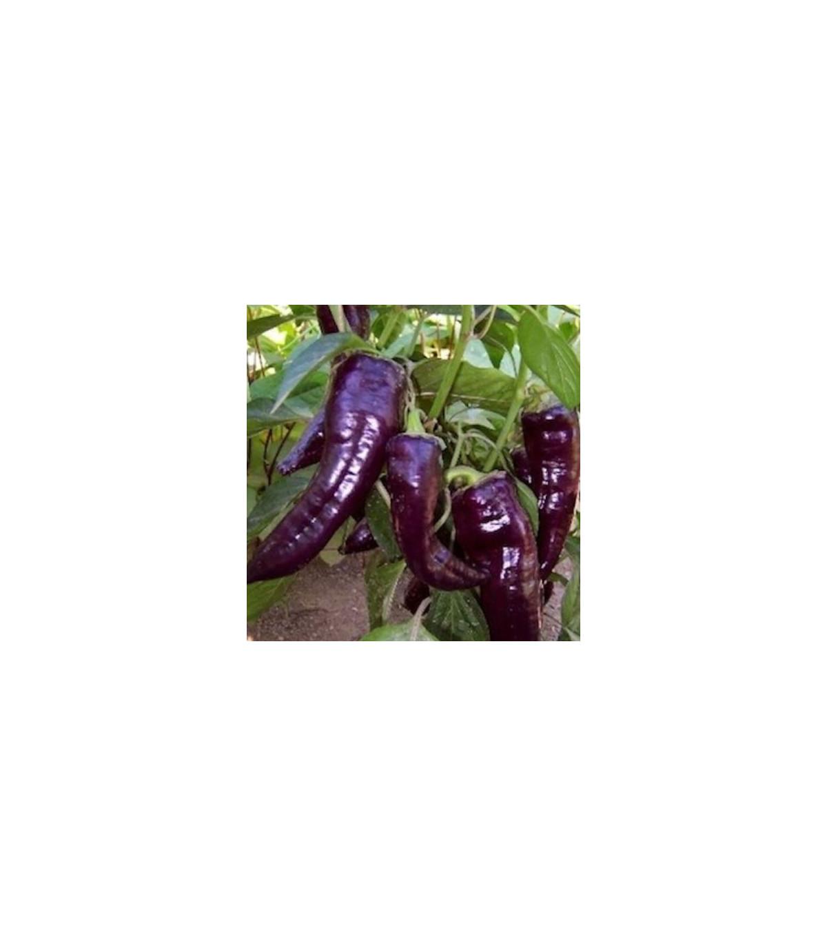Chilli Dorset Naga - Capsicum chinense - 6 ks