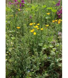 Bylinková vonička - semena lučních květin - 50 g