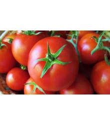 More about Rajče tyčkové Sláva Porýní - Lycopersicon lycopersicum - semena rajčat - 50 ks