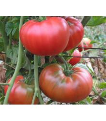 Rajče tyčkové hybridní Virginia F1 - prodej semen rajčat -5 ks