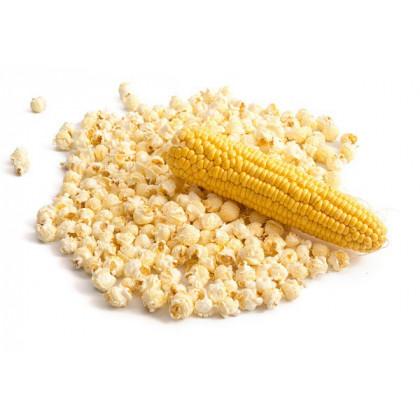 Kukuřice pukancová F1 - Zea mays - semena kukuřice - 15 ks