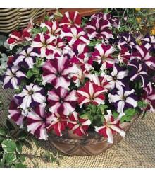 Petúnie nízká Stars mix - Petunia nana compacta - prodej semen petunie - 20 ks