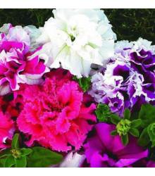 Petúnie velkokvětá Duplika F1 mix barev - Petunia grandiflora - prodej semen petunie - 20 ks