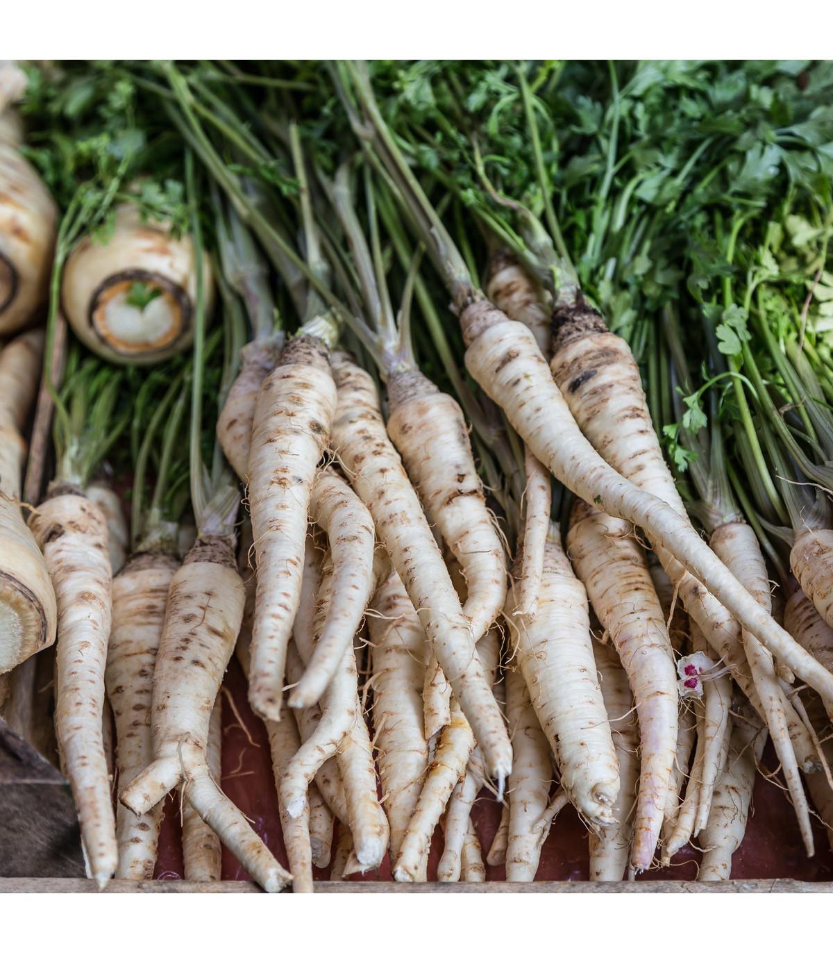 Pastiňák dlouhý bílý Halblange - Pastinaca sativa - osivo pastiňáku - 1 g