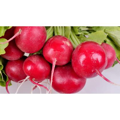 Ředkvička Princ Rotin - prodej semen ředkvičky - 0,5 gr