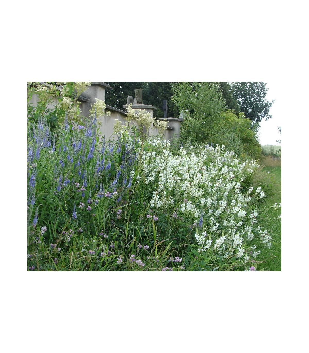 Česká květnice - směs semen - 50 gr