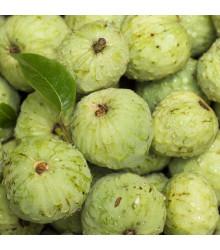Čerimoja - Anona čerimoja - Anona cherimoia - osivo anony - 5 ks